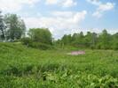 2004-06-05.2801.Flamborough.jpg