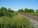 2004-06-28.3588.Finch.jpg