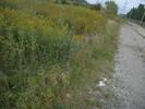 2004-09-28.9557.Guelph.jpg