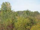 2004-10-01.0110.Guelph.jpg
