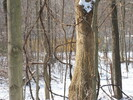2004-12-22.4603.Deerfield.jpg