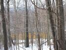 2004-12-22.4605.Deerfield.jpg
