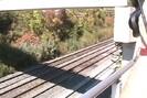 2006-10-07.5329.Bayview_Junction.mpg.jpg