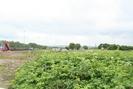 2007-06-18.5171.Musselburgh.jpg