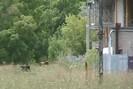 2007-08-19.7120.Guelph.mpg.jpg