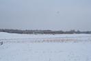 2009-01-10.4731.Killean.jpg