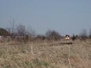 2009-04-25.0509.Corwhin.jpg