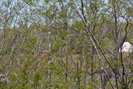 2013-05-25.4759.Newtonville.jpg