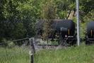 2013-05-25.4773.Newtonville.jpg