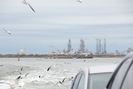 2020-01-01.8367.Galveston-TX.jpg