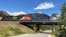 2020-08-08.0652.Jasper.jpg